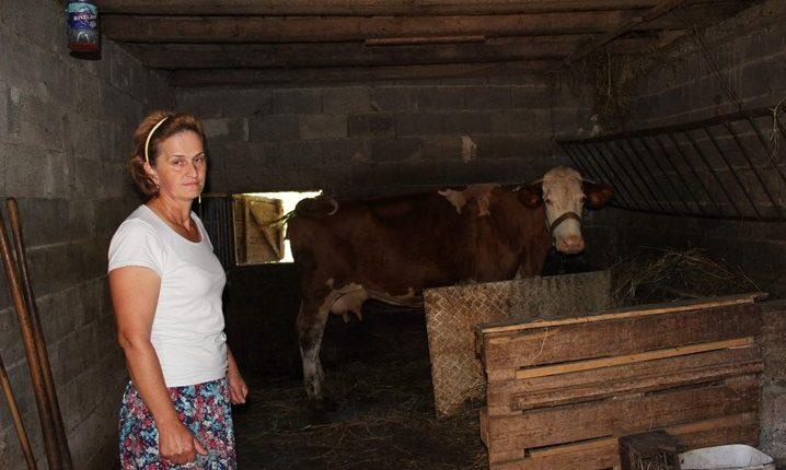 Šokantno: Manijak zatečen kako siluje kravu u štali